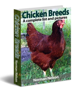 building-your-own-chicken-coops